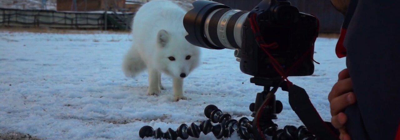 Minha Vida no Ártico