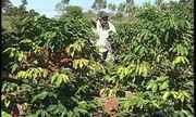 Trabalhadores rurais têm pouca informação sobre aposentadoria rural