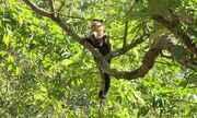 Macacos da Mata Santa Genebra, em Campinas, não têm vírus da febre amarela, aponta estudo