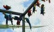Aves da Amazônia são devolvidas para a natureza após resgates