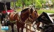 Prefeitura de Petrópolis convoca empresas interessadas no transporte turístico