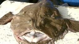 Globo Mar embarca em aventura em busca do peixe-sapo
