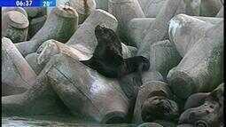 Molhes da Barra, em Rio Grande, RS, são refúgio para leões-marinhos