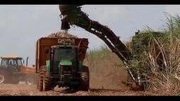 Uberaba se destaca na produção de cana-de-açúcar do país