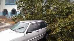 Quatro pessoas ficam presas em carro após tempestade derrubar árvore em Passos (MG)