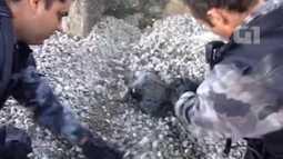 Batalhão de Ação com Cães encontra drogas escondidas em brita