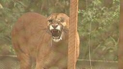Refúgio em Telêmaco Borba é lar para dezenas de espécies de animais silvestres