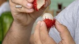 Amazônia Rural mostra a exótica fruta 'rambutã'