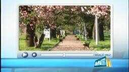 Telespectadora registra florada de paineira em distrito de Santa Juliana