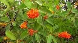 População do Jalapão usa plantas do cerrado em tratamentos medicinais