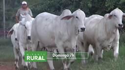 Produtores rurais são orientados a transformar sítios em pequenas empresas no Oeste do MA