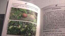 Livro lançado pela Embrapa explica benefícios da mangaba
