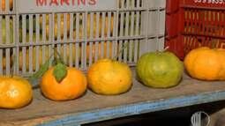 Comerciante revende ponkans e enfrenta dificuldades com preço da fruta