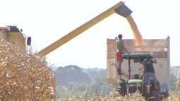 Mato Grosso do Sul já colheu 54% da produção de milho