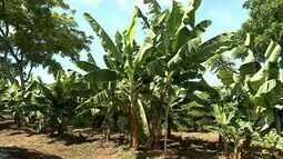 Agricultores reivindicam inclusão das sementes crioulas em Programa do Governo