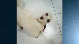 Donos procuram por cães desaparecidos na Região Metropolitana de Goiânia