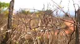 Queimadas preocupam proprietários rurais na Serra do Japi