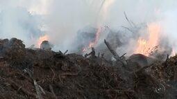 Incêndio destrói área de mata nativa na região rural de Palestina, SP