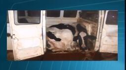 Cabeças de gado furtadas são encontradas dentro de veículo e grupo é detido em MG