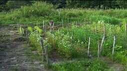 Professores e alunos da UFS falam sobre manejo de solo