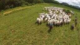Rede de supermercados vai acompanhar a produção de bovinos em MT