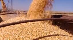 Em Minas Gerais, previsão para segunda safra do milho preocupa produtores