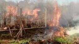 Homem é preso em flagrante por atear fogo em vegetação em Uberlândia