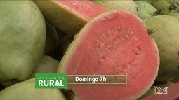 Veja os destaques do Mirante Rural deste domingo (4)