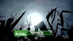 Veja os destaques do Mirante Rural deste domingo (25)