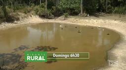 Veja os destaques do Mirante Rural deste domingo (16)