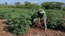 Agricultor familiar aprende a diversificar produção e está feliz com resultados em Corumbá