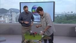 Convidado mostra como se faz uma horta caseira