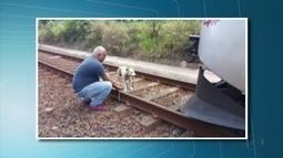 Cadela é amarrada em trilho do metrô, mas é salva pelo maquinista