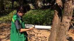 Equipamento faz diagnóstico do tronco das árvores sem ter que cortá-las