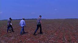 Técnicos percorrem lavouras de MT para acompanhar o plantio da soja