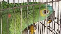 Operação conjunta no Norte de Minas apreende pássaros