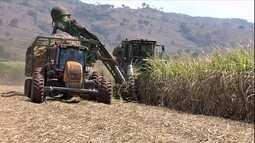 Estiagem antecipa colheita da cana-de-açúcar em Goiás