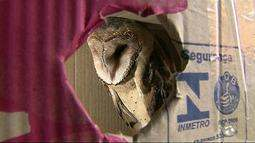 Coruja é encontrada machucada em Caruaru