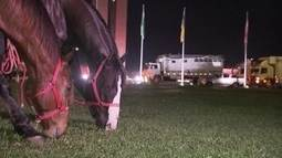 Vaqueiros de todas as partes do Brasil ocupam a Esplanada dos Ministérios