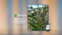 """Telespectadores enviam fotos e vídeos para campanha """"Sua Árvore"""" da TVTEM"""