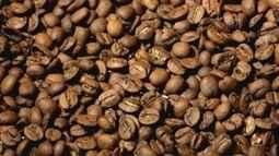 Fazenda investe na fermentação para produzir cafés diferenciados