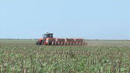 IBGE e Conab avaliam safra de grãos no Sul do Maranhão