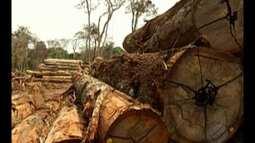 Desmatamento na Amazônia cresceu quase 30% no último ano