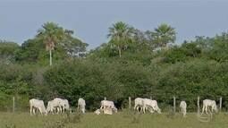 Pecuaristas trocam bioma do Pantanal por pastagem própria