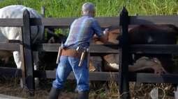 Veja a agenda do produtor rural do Alto Tietê neste fim de semana