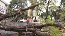 Quinze árvores caíram durante temporal em Maringá