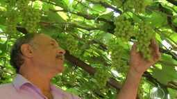 Família de Ferraz fala sobre tradição na plantação de uvas