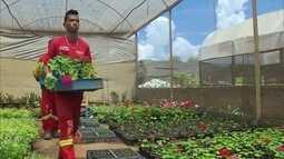 Novacap troca plantas por brinquedos para crianças carentes