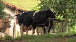 Produtores de leite de Leopoldina enfrentam queda no preço do produto