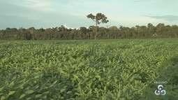 Prazo para produtores de soja cadastrarem áreas produtivas termina nesta sexta, 30